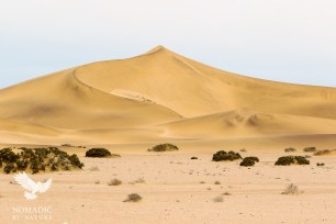 Desolate Landscapes on the Desert Safari, Dorob National Park, Namibia