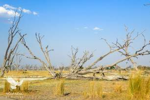 Dead Tree Island, Okavango Delta, Botswana