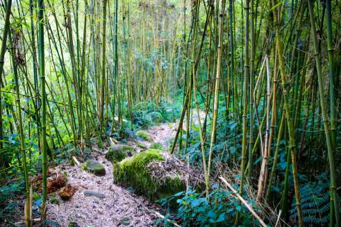 Trekking through the Giant Bamboo Forest of the Rwenzori Mountains
