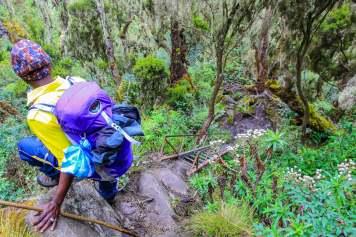 Bernard Climbs Up a Ladder in the Rwenzori Mountains