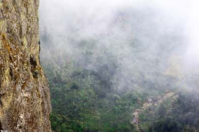 Looking Down on the Rwenzori Jungle Far Below