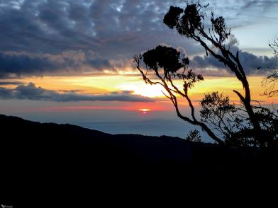 The Sun Rise Over Heathers, Rwenzori Mountains National Park