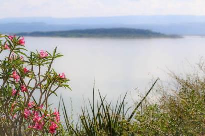 The Desert Rose on Samatian Island