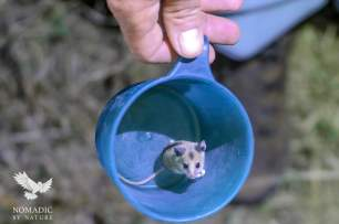 A Mouse Invited itself for Dinner, Serengeti National Park, Tanzania