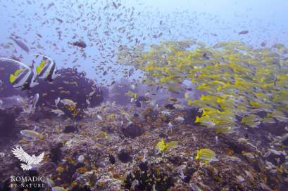 Schools of Tropical Fish, Scuba Diving, Tofo Beach, Mozambique