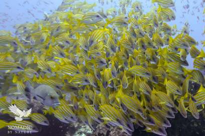 Facing off with a School of Fish, Scuba Diving, Tofo Beach, Mozambique