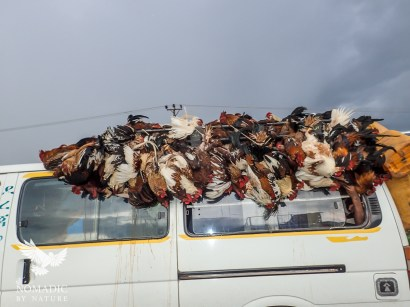 Chickens on a Bus, Omo Valley, Ethiopia