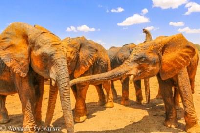 Elephant Tag, You're It!, Umani Springs
