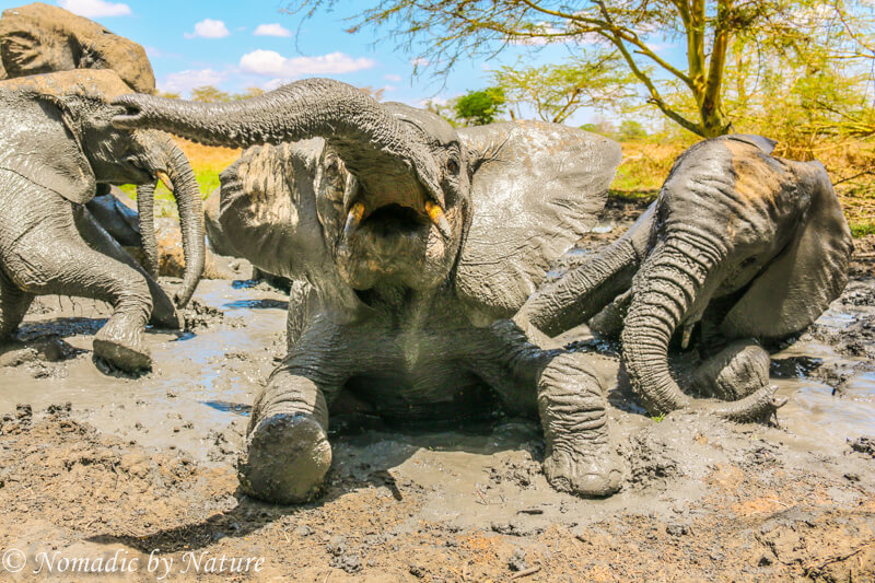 Celebrating the Glory of a Mud Bath, Umani Springs