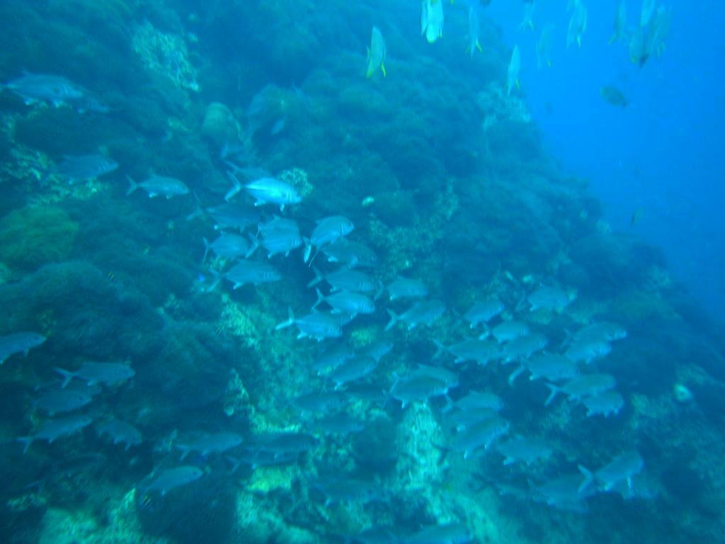andaman sea scuba diving thailand