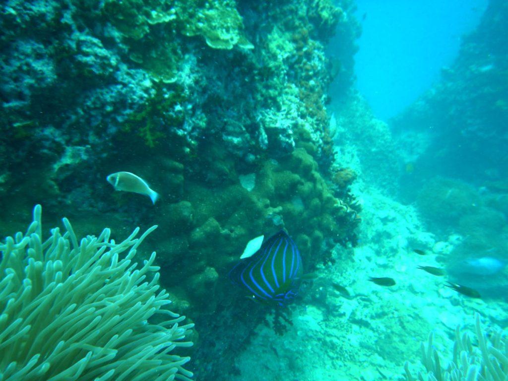 thailand scuba