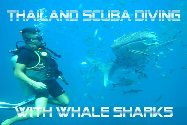 thailand scuba diving with whale sharks blog