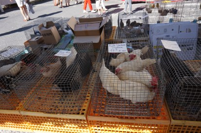 chickens at the market