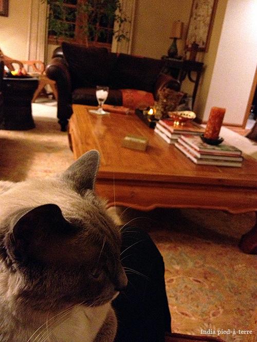 Seesa Surveying the Living Room