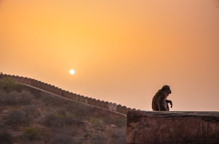 View from Nahargarh Fort, India