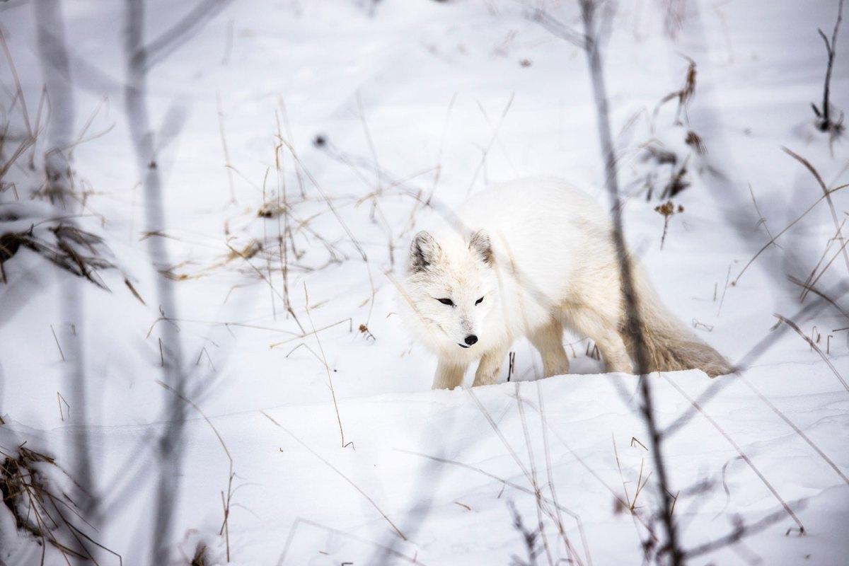 Nomadic Fare in Yukon, Canada at Wildlife Preserve