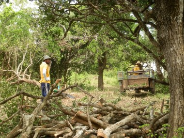 Moving wood around site with the Landmaster