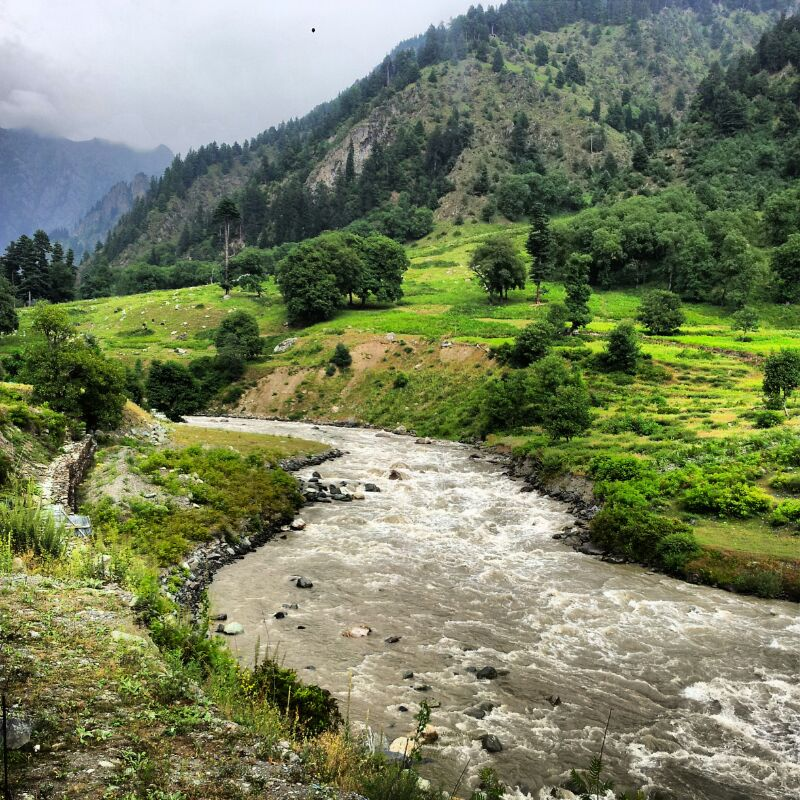 Lush Green in Manali