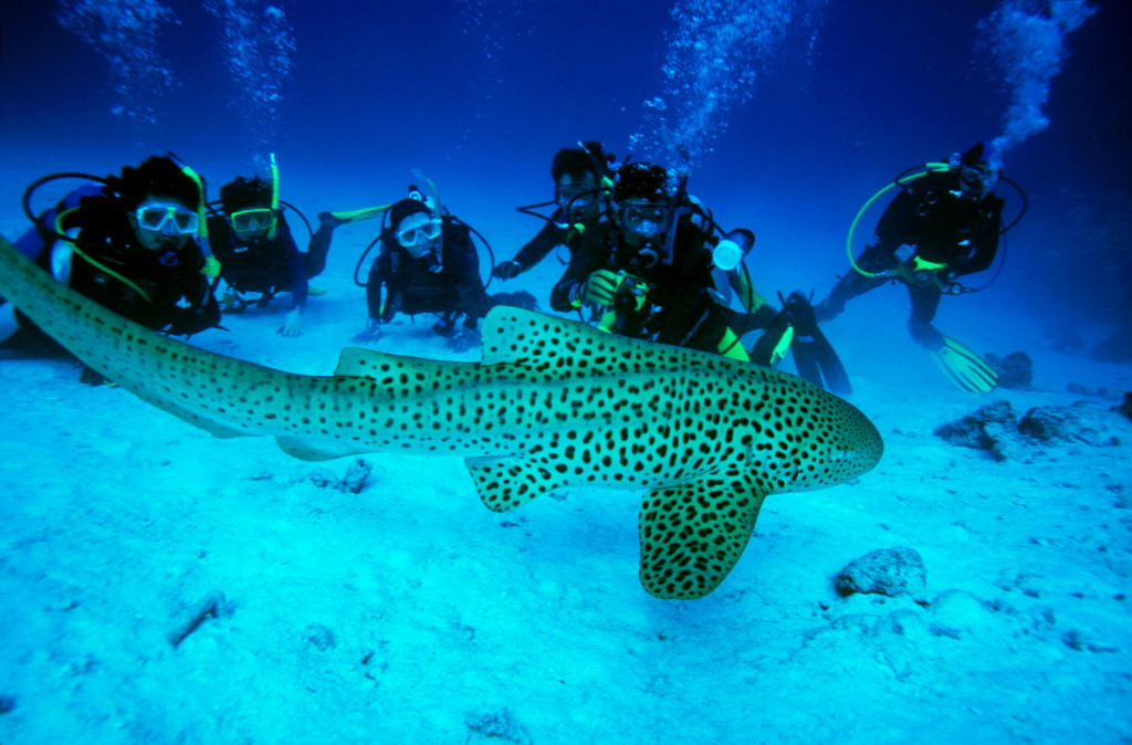 Diving - Andaman Islands