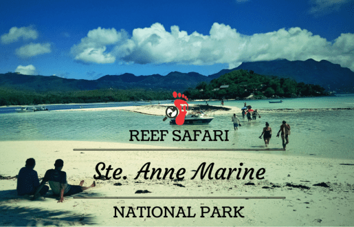 Reef Safari at Ste. Anne Marine National Park