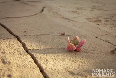 Plant Life in the Desert