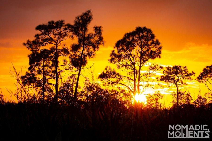 Highlands Hammock Sunset
