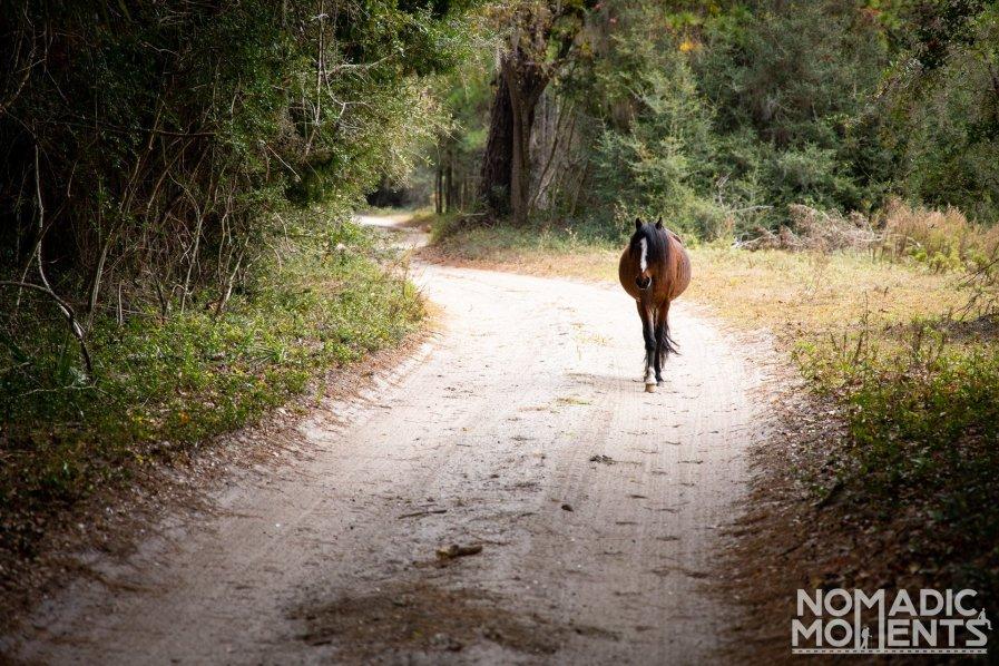 Main Road Wild Horse