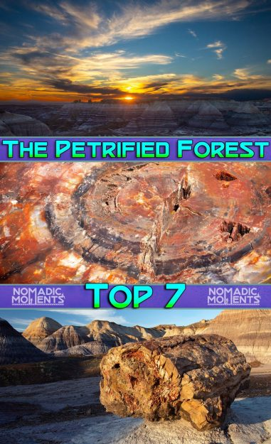 Visiting the Petrified Forest Top 7