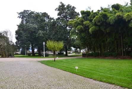 Bamboo forest to the right at Beylerbeyi Sarayı in Beylerbeyi, Istanbul, Turkey