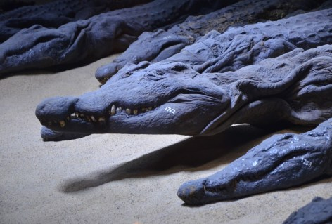 Crocodile Museum at Kom Ombo in Egypt