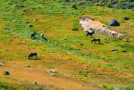 Wild horses at El Morado, Cajón del Maipo, Chile