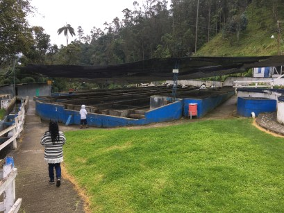 Trout hatchery in Valle de Cocora, Quindío, Colombia