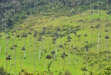 Valle de Cocora, Quindío, Colombia