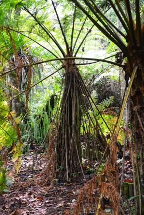 Nature walk at Los Yarumos in Manizales, Caldas, Colombia