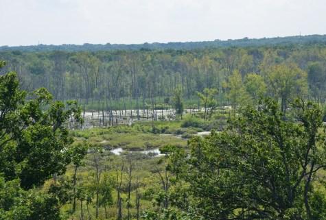 View of Great Marsh from Dune Ridge Trail Indiana Dunes National Lakeshore