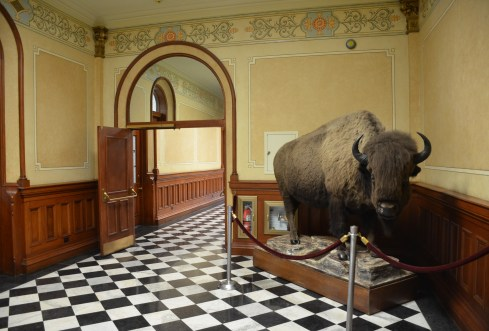 Bison at the Wyoming State Capitol in Cheyenne