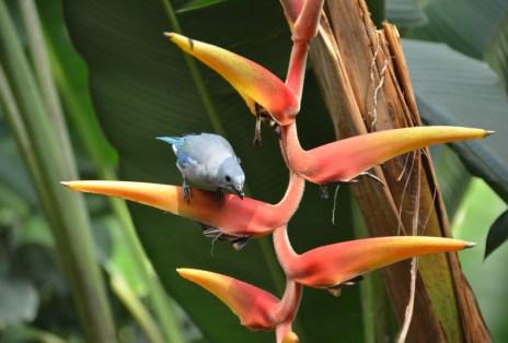 Bird watching at Quindío Botanical Garden