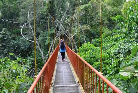 Bridge at Quindío Botanical Garden