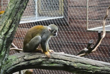 Monkey at Zoológico de Cali in Colombia