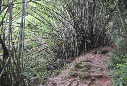 Hiking Trail T10 on Ilha Grande, Brazil