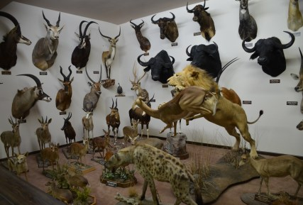 African animals at the Nelson Museum of the West in Cheyenne, Wyoming