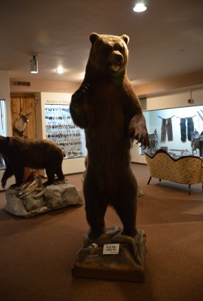 Grizzly bear at the Nelson Museum of the West in Cheyenne, Wyoming