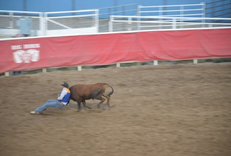 Bulldogging at Stampede Park in Cody, Wyoming