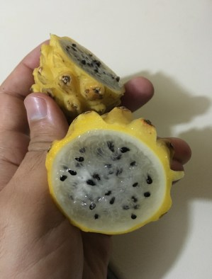Pitahaya Fruit in Colombia