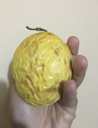 Maracuyá Fruit in Colombia