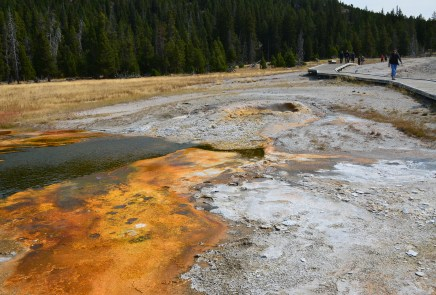 Pump Geyser on Geyser Hill at the Upper Geyser Basin in Yellowstone National Park, Wyoming