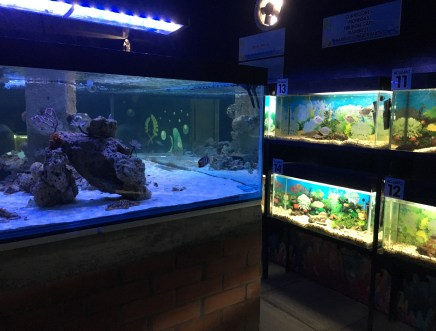 Aquarium at Granja de Noé at Parque Consotá in Galicia, Risaralda, Colombia