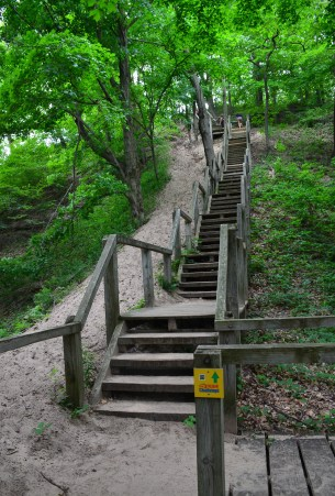 Trail #8 at Indiana Dunes State Park