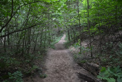 Trail #7 at Indiana Dunes State Park