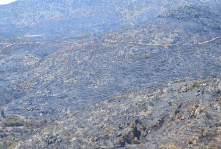 Aftermath of 2012 fires near Tholopotami, Chios, Greece